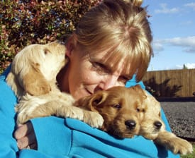 Terrie and labradoodle puppies at Mountain View Labradoodles